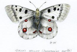 40 let TNP - Portreti biodiverzitete narodnega parka